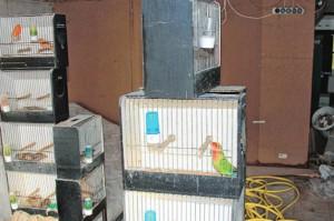 400 dode vogels in huis in Landen