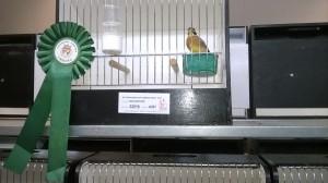 FAVV-Vogelgriep(Aviaire influenza) maatregelen Belgie)